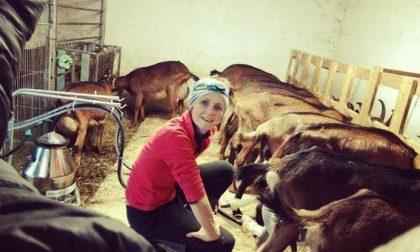 Molla il posto fisso alle Poste e diventa allevatrice di capre