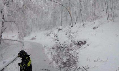 Neve come Vaia: strage di alberi