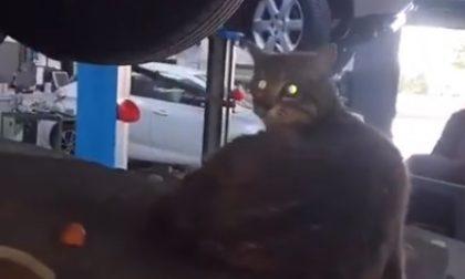 Miagolio nell'auto, la porta in officina: mamma gatto stava partorendo i cuccioli – VIDEO