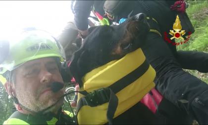 Cane morso da una vipera sul Col Nudo: elisoccorso in azione per salvarlo VIDEO