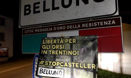 """""""Libertà per gli orsi del Trentino!"""": anche a Belluno striscioni contro la detenzione di M49, M59 e DJ3"""
