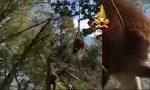 Mucca gravida finisce nel dirupo sul Monte Tomatico: recuperata con l'elicottero – VIDEO
