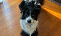 Kilian non si trova, la raccolta fondi donata a due associazioni che aiutano gli animali