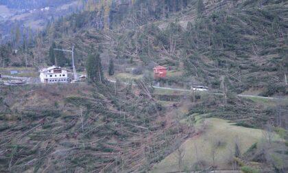 Rimboschimento in Val Visdende dopo la tempesta Vaia: progetto da 100mila euro
