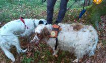 Due cani finiscono in una forra, Scott e Teo recuperati dal soccorso Alpino