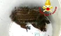Vi è mai capitato uno scoiattolo nella canna fumaria? Il video dei soccorsi