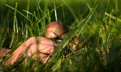 Cercatore di funghi si ferisce nel bosco vicino a Fusine
