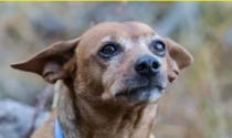 Addio a Luigi, il cane-postino che portava beni di prima necessità alla famiglia durante il lockdown
