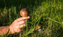 Cercatore di funghi ruzzola per una quindicina di metri lungo un pendio, 90enne ferito